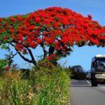 Cómo moverse por isla Mauricio