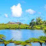 Ruta del Té Mauricio - Bois Chéri